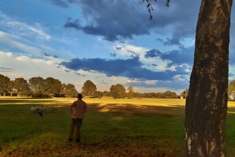 Foto: Schäfer beobachtet seine Herd auf der Weide (© Christoph Dorr)