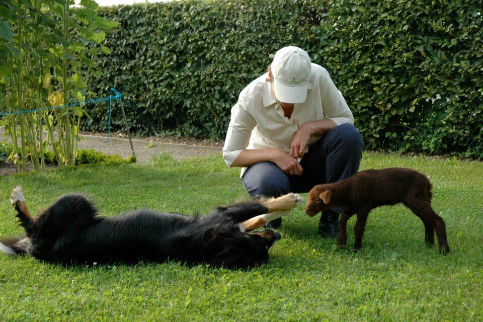 Foto: Hund und Coburger Fuchsschaf Lamm spielen (© Christiane und Thomas Rempen)