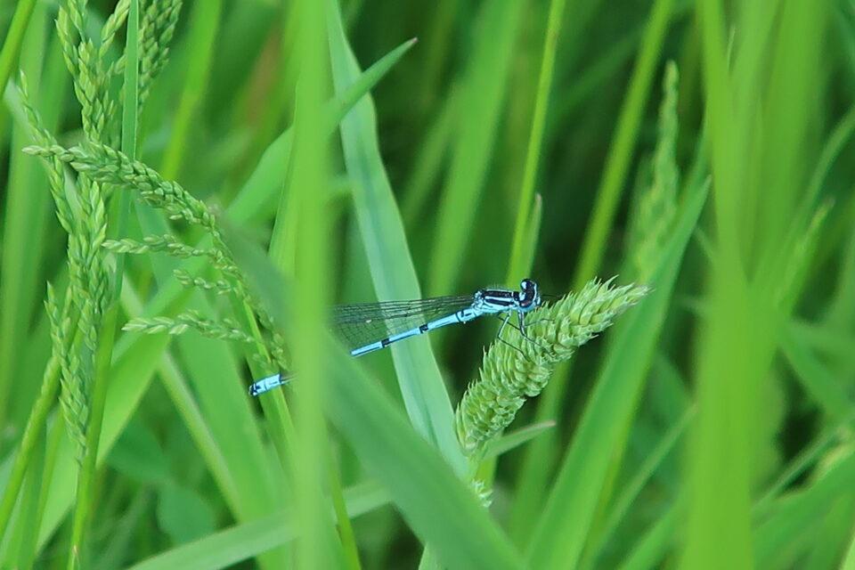 Foto: Libelle im Moor (© Ortrun Humpert)