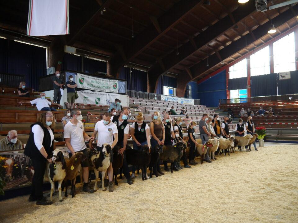 Foto: die besten Vertreter der Landschafrassen des zweiten Tages. Aus ihrer Mitte wurde der Landessieger der Landschafrassen gewählt. (© Schafzüchtervereinigung NRW)
